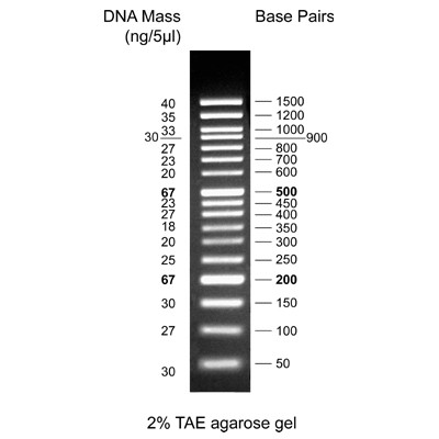 Biotechrabbit 50 Bp Dna Ladder Ready To Use Dna