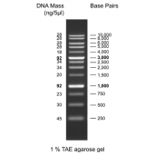 1 kb DNA Ladder, ready to use