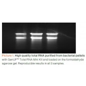 GenUP™ Total RNA Kit