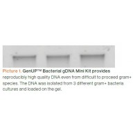 GenUP™ Bacteria gDNA Kit