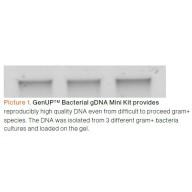 GenUP™ Bacteria gDNA Kit