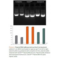 GenUP™ Plasmid Kit