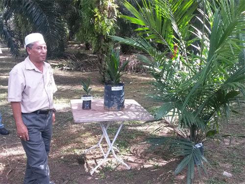 Palm oil planation